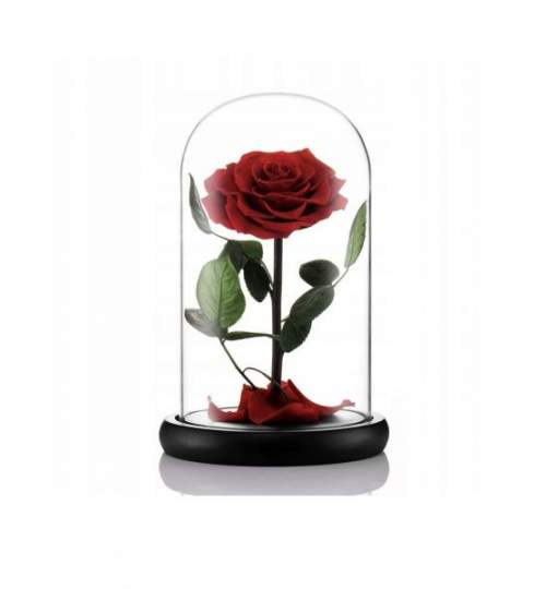 Trandafir Criogenat Rosu ManiaMagic